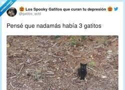 Enlace a El cuarto gato escondido en esta foto se siente marginado, por @gatitos_qctd