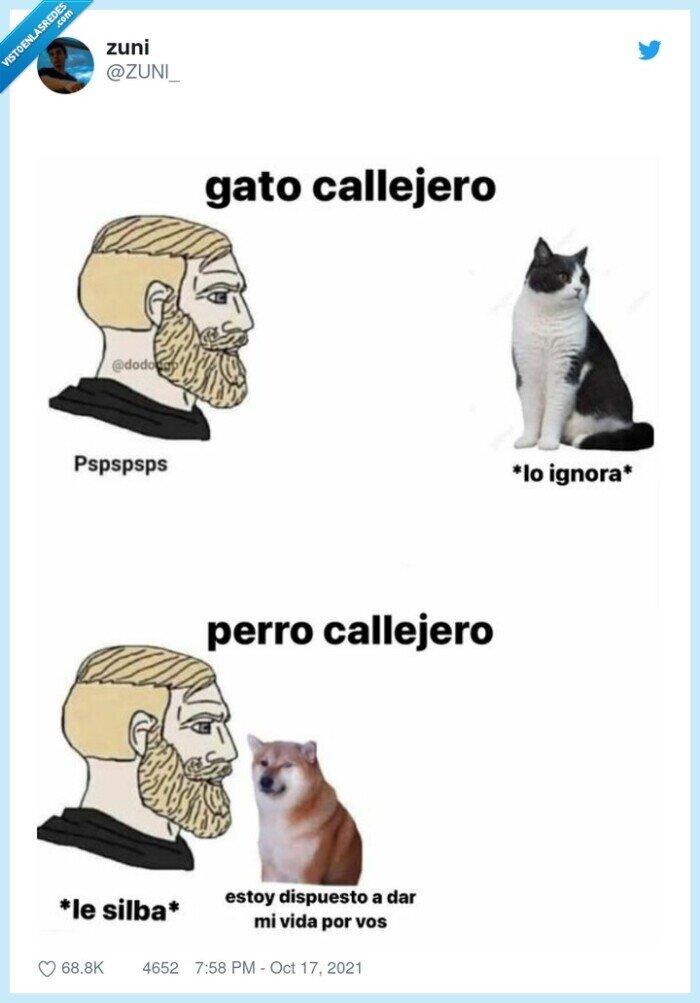 gatos,ignorar,pasar,perros