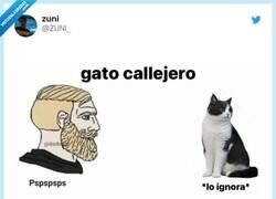 Enlace a Gatos vs perros, por @ZUNl_