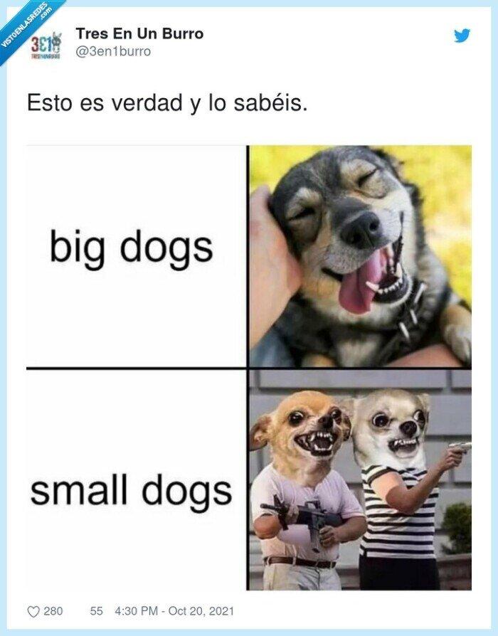 grandes,pequeños,perros