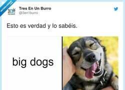 Enlace a Perro ladrador, poco mordedor, por @3en1burro