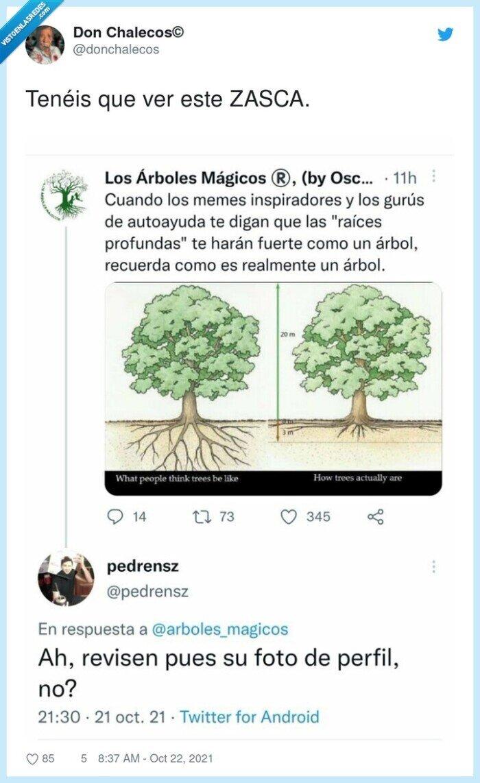 árboles,raíces,zasca