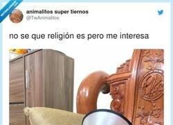 Enlace a A mí me interesa muchísimo, aunque pinta que el sumo sacerdote está a punto de saltarte encima, por @TwAnimalitos