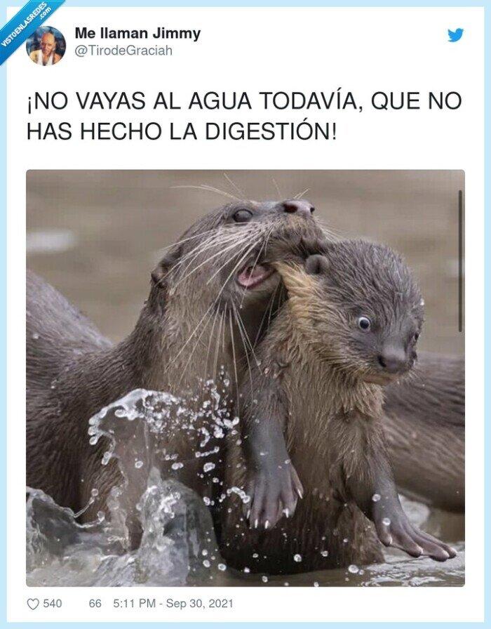 agua,digestión,marmotas