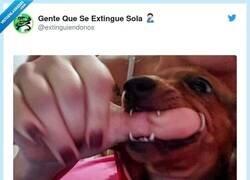 Enlace a Me parto con la cara del perro en la segunda foto, por @extinguiendonos