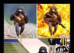 Enlace a Este halcón malote recibe la guerra de photoshop más legendaria de la historia