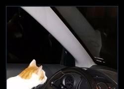 Enlace a 15 Divertidos snapchats de gatos que tienes que ver ahora mismo