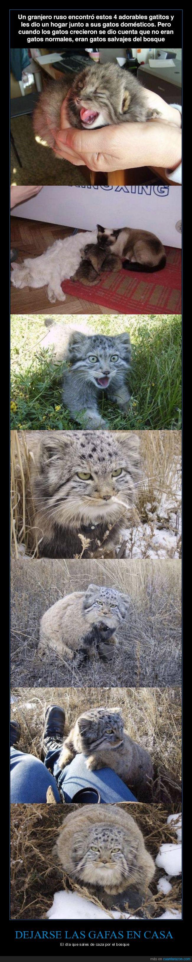 acoger,adoptar,gatos,gatos salvajes,granjero rusos